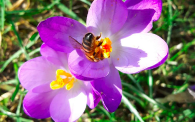 Spring photo competition